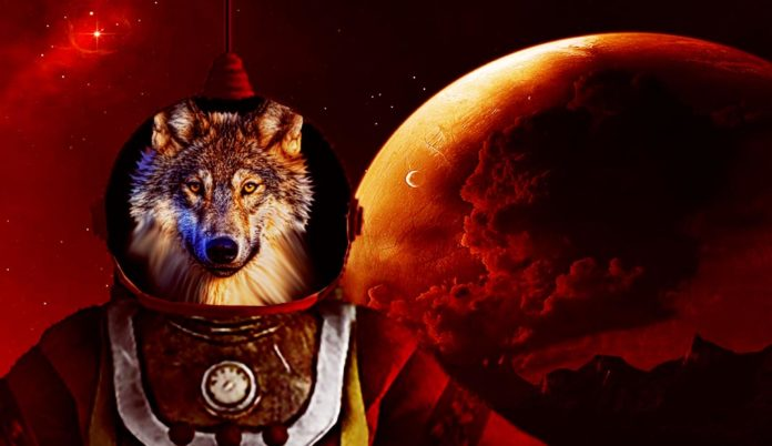Chernobyl Wolves to Live on Mars with Humans